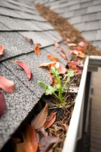 Gutter Cleaning - Blocked Gutter
